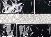 ceramiche-tonalite-silk